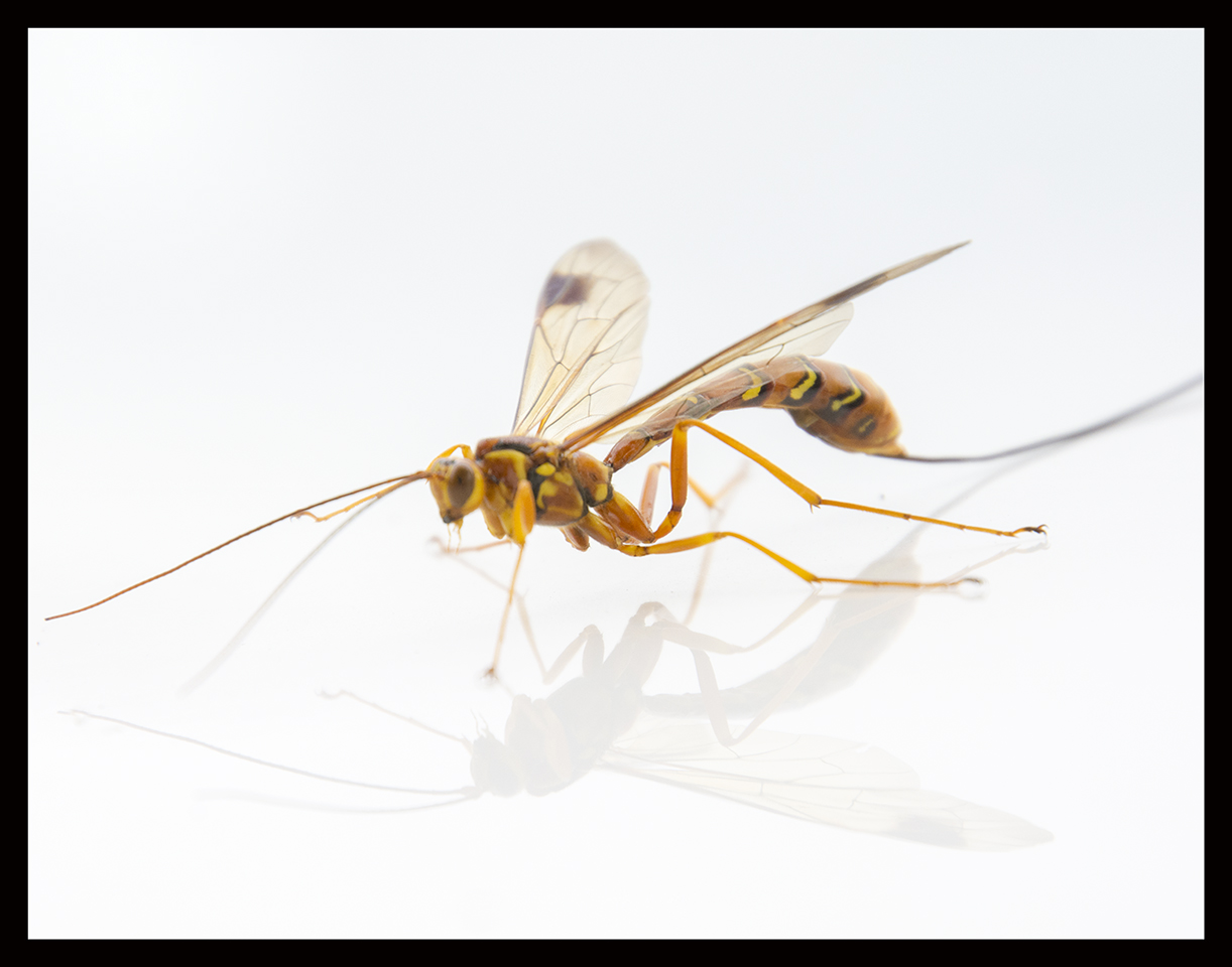 Advanced Print ~ Lyndon Marter ~ Wasp One