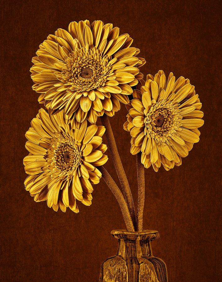 Advanced Prints ~ Jim Turner ~ Yellow Gerberas