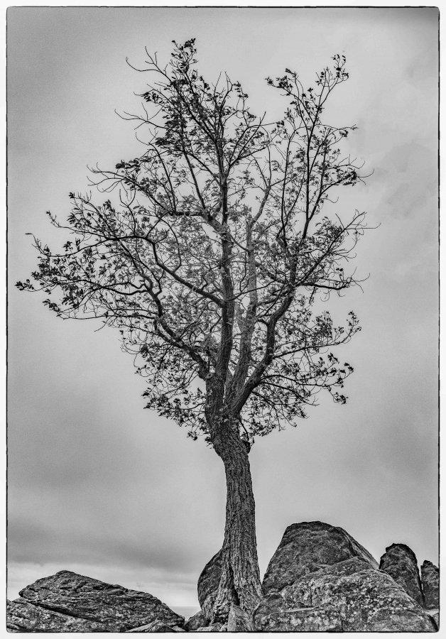 Novice Projected ~ Sherm Edwards ~ Wayside