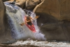 Advanced Projected ~ Bob Catlett ~ Red Kayak