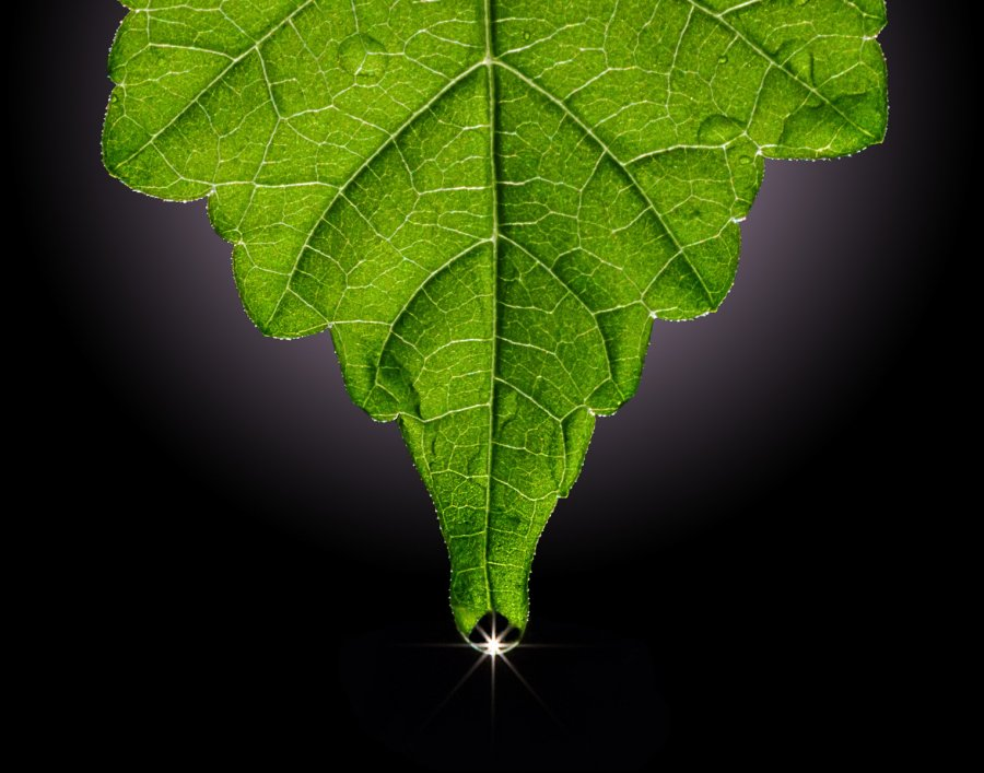 Advanced Projected ~ David Terao ~ Leaf Droplet
