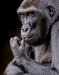 Advanced Projected ~ David Terao ~ Gorilla