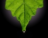 Advanced Projected ~ David Terao ~ Leaf Droplet