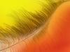 Myphuong Nguyen - Yellow Feather