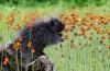 David Blass, Porcupine in Flowers