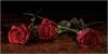 Jim Turner, Three Red Roses