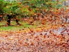 Laurel Sharf, leaf storm