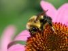 Dan Sisken - Flower, Pollen, Bee