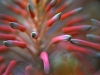 Beth Koller - Flower Tips