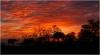 Jim Rogers, Elephant Sunset
