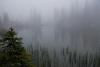 Gosia Klosek, Fog