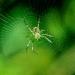 David Terao, Spider in Web