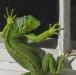Loretta Argrett, Iguana