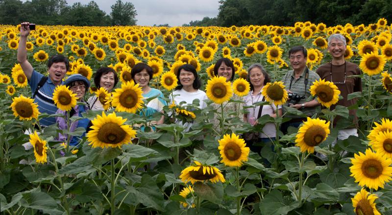 Genie Sachs, Celebrating Sunflowers